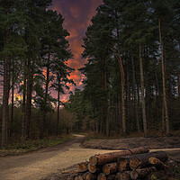 Buy canvas prints of Woodland Sunset by Darren Ball