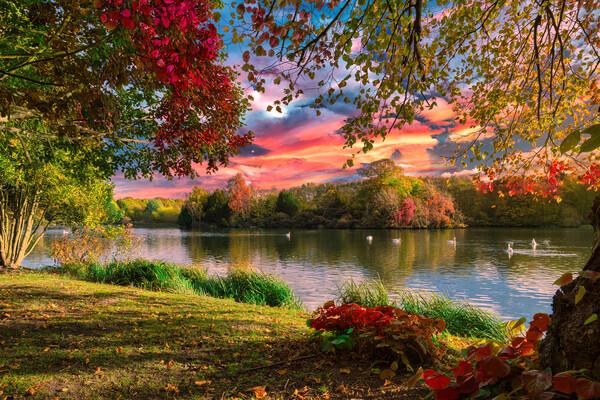 Autumn Lakeside Canvas Print by Darren Ball