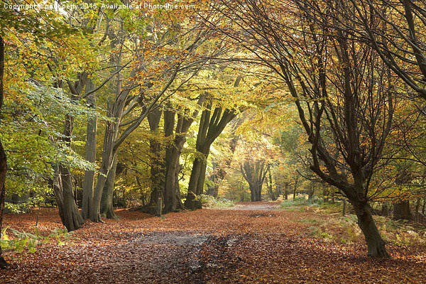 Epping Forest Autumn 5 Canvas Print by paul petty