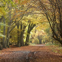Buy canvas prints of  Epping Forest Autumn 5 by paul petty