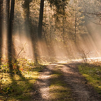 Buy canvas prints of Woodland Light by Tracey Whitefoot