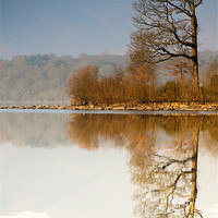 Buy canvas prints of Reflection by Tracey Whitefoot