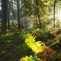 Buy canvas prints of Autumn Morning I by Tracey Whitefoot