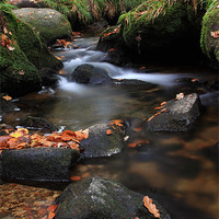 Buy canvas prints of Autumn Gold by Christopher Barnard