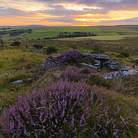 Buy canvas prints of Heather on Bodmin Moor by Christopher Barnard