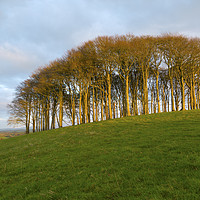 Buy canvas prints of The Nearly Home Trees by CHRIS BARNARD