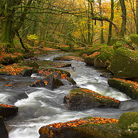 Buy canvas prints of Autumn Gold Golitha Falls by CHRIS BARNARD