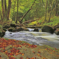 Buy canvas prints of River Fowey at Golitha Falls by austin APPLEBY