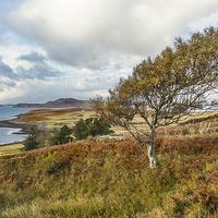 Buy canvas prints of  Windswept Tree by Alex Millar