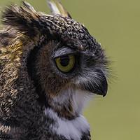 Buy canvas prints of European Eagle Owl by Alex Millar