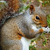 Buy canvas prints of                A Squirrel Close Up             by Jane Metters