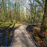 Buy canvas prints of Bryngarw Country Park  by Jane Metters