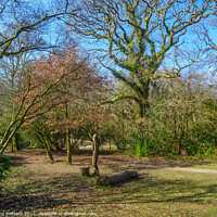 Buy canvas prints of Bryngarw Park  by Jane Metters