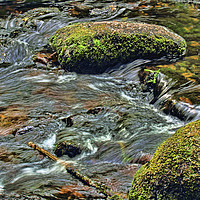 Buy canvas prints of River Dart at Dartmeet Dartmoor by Avril Harris