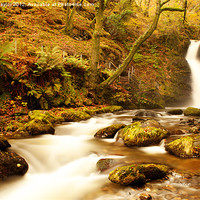 Buy canvas prints of Autumn Waterfall by David Haylor